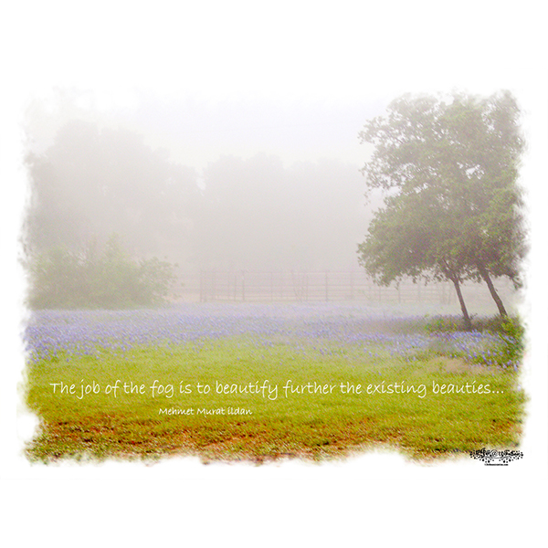 Fog-beauty-quote