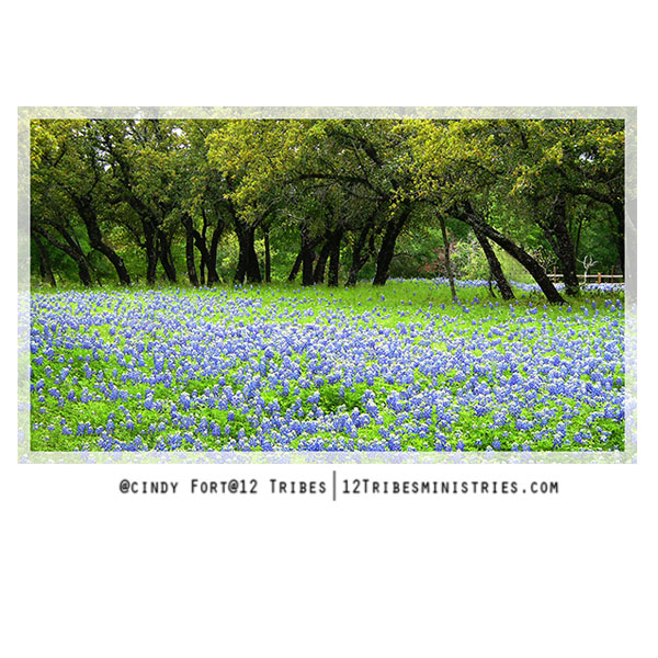 Fragrant-Bluebonnets