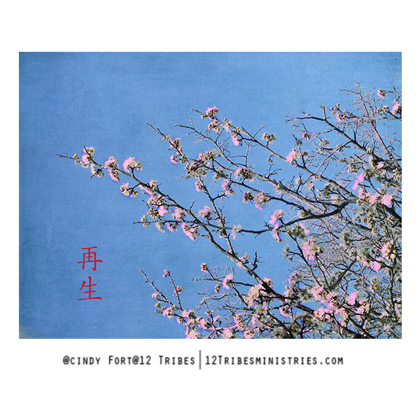 new-birth-cherry-blossoms